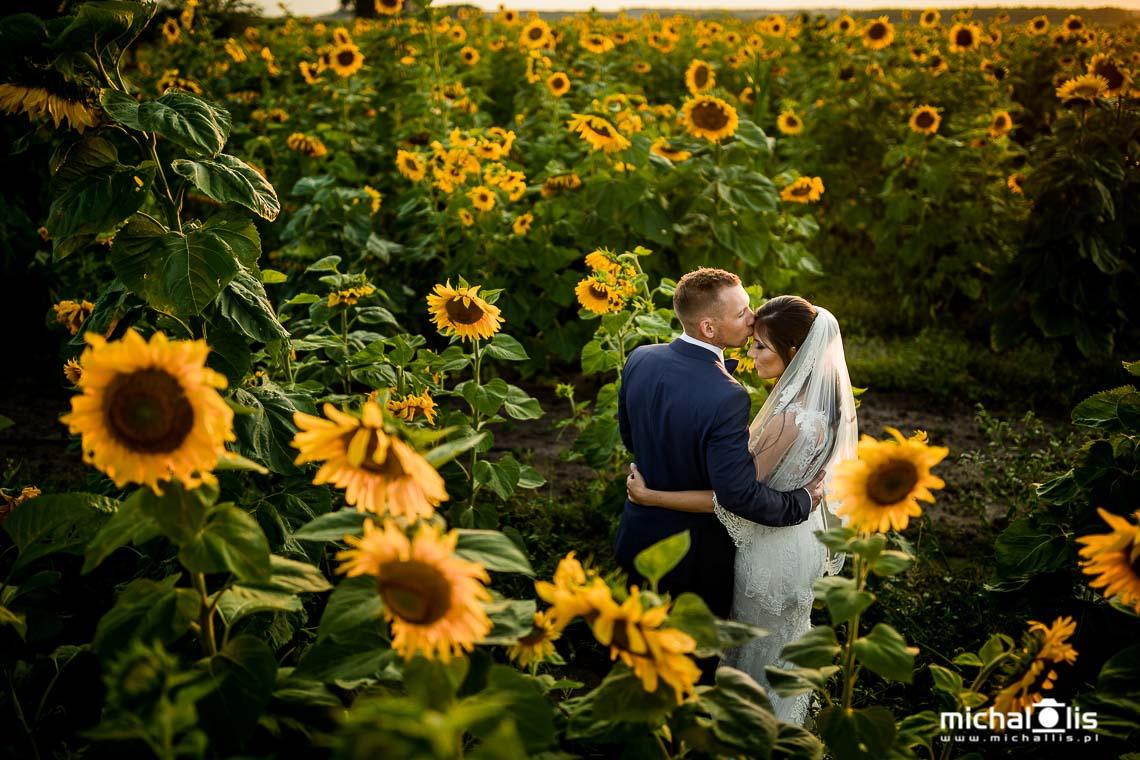 słonecznikowe pole miejsce na plener ślubny